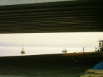 Padi di bawah kaki jembatan suramadu surabaya