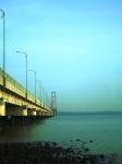 Padi di bawah kaki jembatan suramadu surabaya 6
